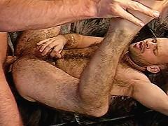 Gay bears getting their dicks sucked